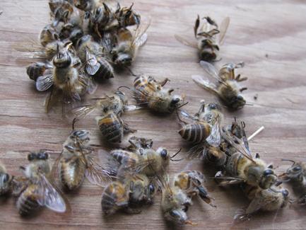 ハチの大量死(P25)