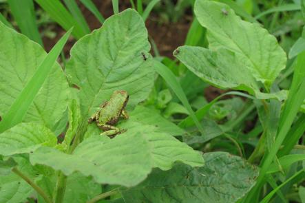 葉の上のカエルと虫3匹-1